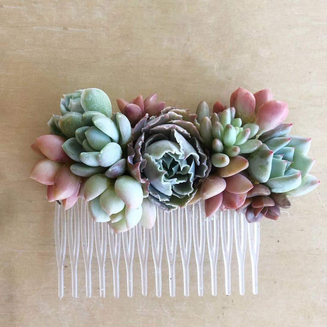 Succulent Bridal Shower With Pictures Succulents Network
