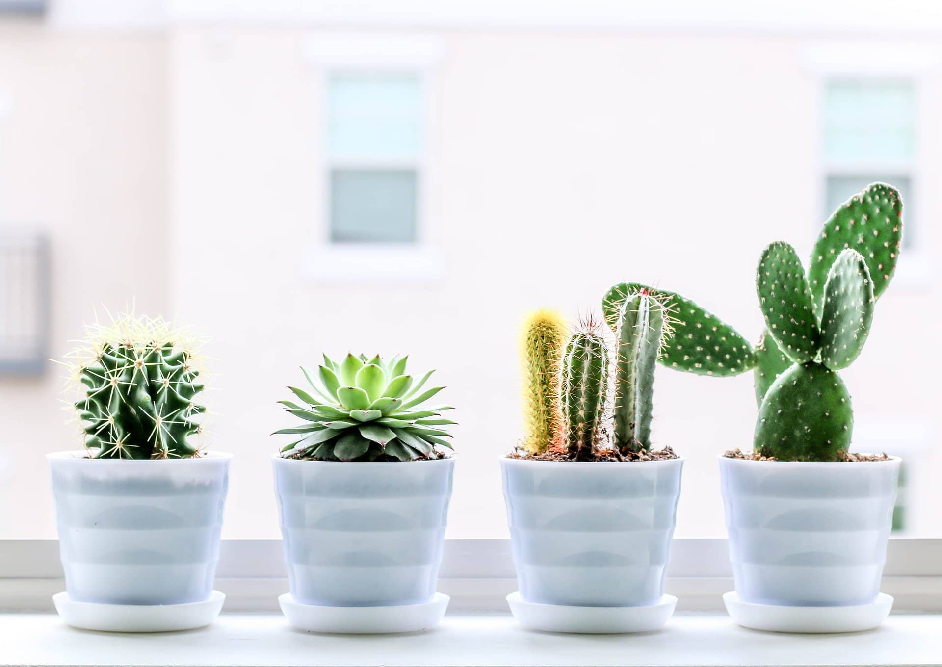 8 Tips On How Often To Water Succulents Succulents Network