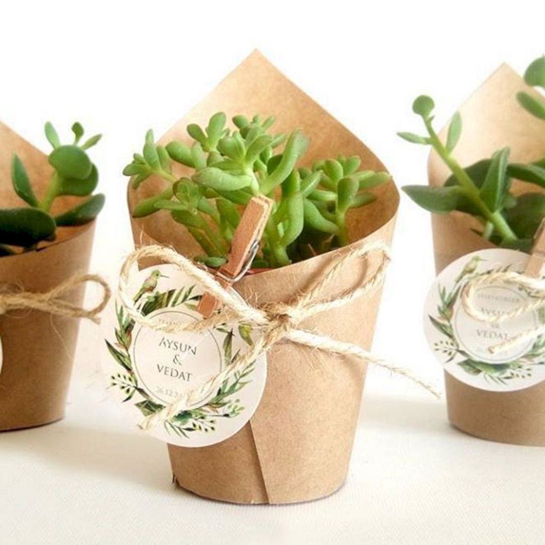 The Best Succulent Wedding Favors With Pictures Succulents Network