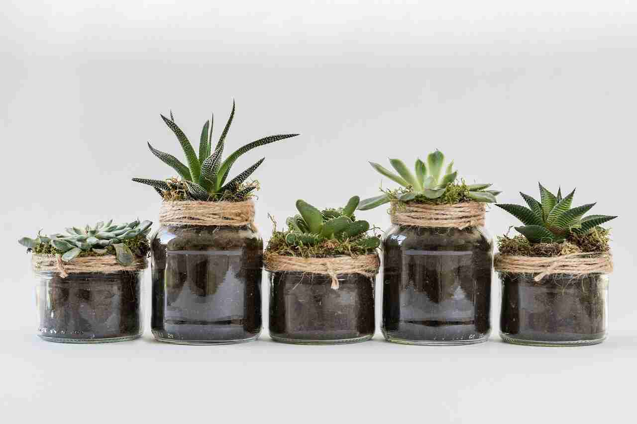 How To Repot Succulents Guide With Pictures Succulents Network