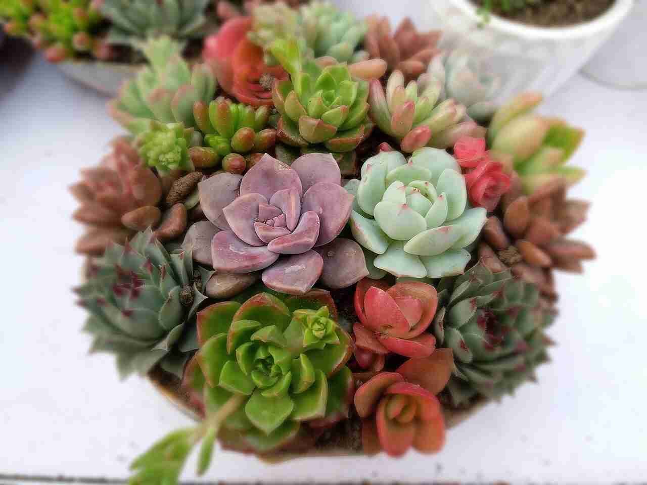 How To Water Succulent Plants Guide With Pictures Succulents Network