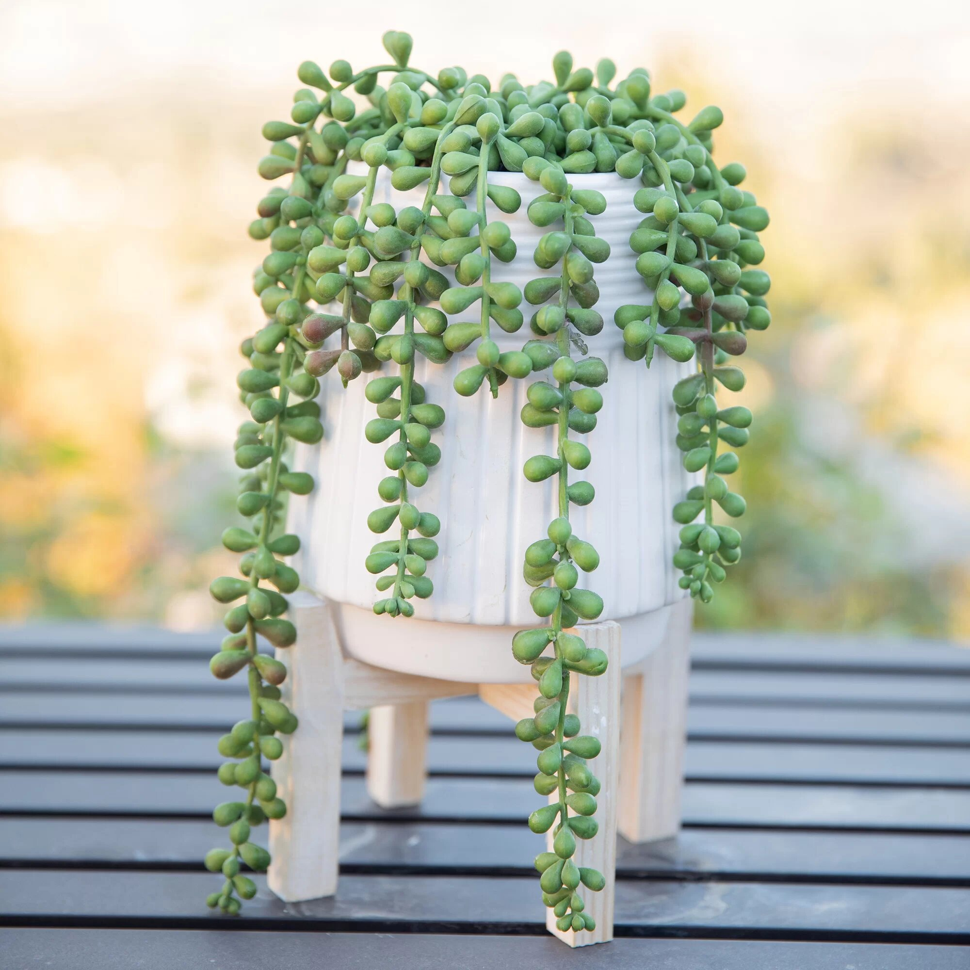 How To Take Care Of String Of Pearls Flowering Succulents Network